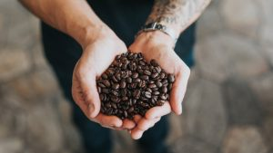 premium coffee beans sunshine coast